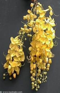 plantes par correspondance fleurs tropicales exotiques plantes et graines vente
