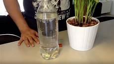 comment arroser ses plantes pendant les vacances 3 astuces pour arroser vos plantes pendant les longues