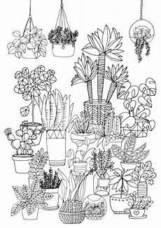 pflanzen zeichnen f 252 r anf 228 nger ganz leicht gemacht
