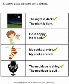 sentence using adjectives about the picture worksheet turtle diary