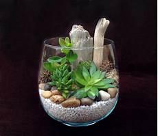 plante grasse plantes grasses pinteres