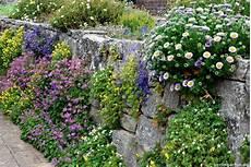 bepflanzung vor einer mauer tipps und tricks 224 la wisley garden berlingarten