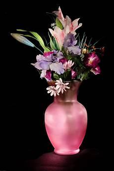 free images purple petal vase pink flora still