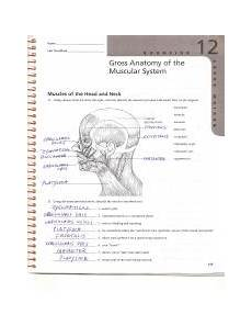 gross anatomy of the muscular system review sheet 12 lab ex 12 review sheet answers0001 name lab time date