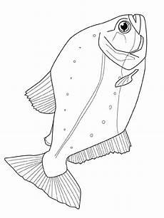 Malvorlagen Fische Jung Fisch Malvorlagen Fisch Zeichnung Malvorlagen Tiere Und
