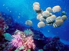 Keindahan Bawah Laut Fauna Dan Flora