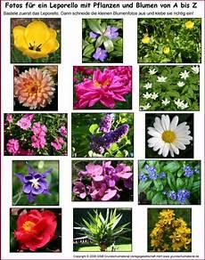 leporello blumen und pflanzen a bis z fotos