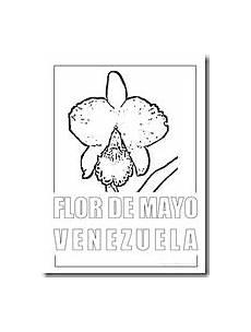 dibujo de la flor nacional de venezuela colorear flor de mayo flor nacional de venezuela