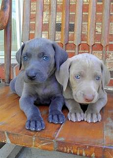 Animal With Blue Fur are there any animals that naturally grow blue fur quora