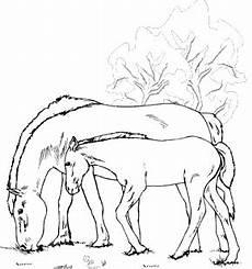 Ausmalbild Pferde Fohlen Malvorlagen Zum Ausmalen Malvorlagen Pferde Stute Und Fohlen