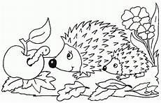Ausmalbild Igel Kinder Ausmalbilder Tiere Igel 979 Malvorlage Tiere Ausmalbilder