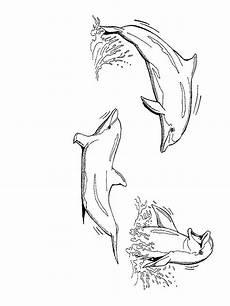 Malvorlagen Delfin J Delfine Ausmalbilder Animaatjes De