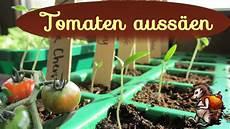 Tomaten Auss 228 En Tomaten Vorziehen Anzucht Mit