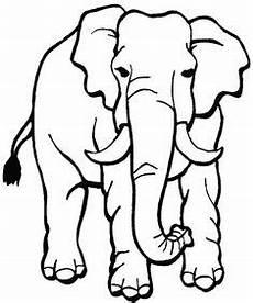 Malvorlagen Elefant Quiz Die 79 Besten Bilder Auf Tiere Zum Ausmalen In 2016