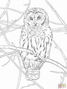 hoot owl coloring page free printable coloring pages