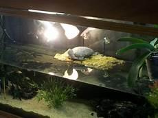 tortue eau douce aquarium photo d 233 coration aquarium tortue