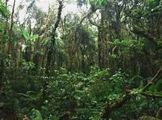 Hutan Indonesia Forester Act