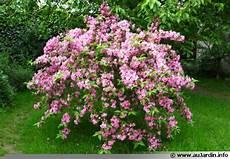 arbuste feuillage persistant jardin alsace vignoble