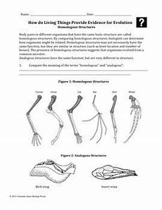 homologous structures worksheet evolution homologous and vestigial structures by biology roots tpt