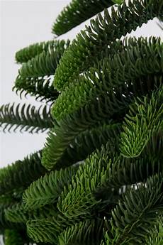 nobilis fir tree 210cm 100 pe plastic mold artificial