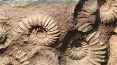 fossil record stratigraphy videos lessons study com