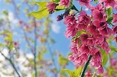 sfondi fiore bellissimi fiori immagini gratis su pixabay