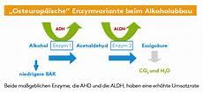 alkohol schneller abbauen alkoholmetabolismus deutsche weinakademie