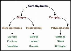 Diagram For Food That Are Carbohydrate by Classification Of Carbohydrates With Types Formula