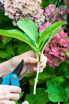 Kleinen Garten Gestalten Mit Wenig Geld N 252 Tzliche Tipps