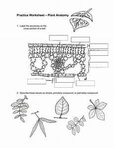 plant anatomy 2