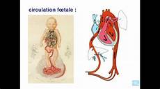 appareil cardio embryologie de l appareil cardio vasculaire partie 8