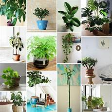 pflanzen f 252 rs schlafzimmer feng shui wohndesign