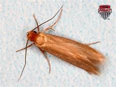 exterminateur de mites