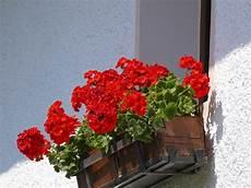 Oscar Brisolara Ainda As Flores De Jardim Ger 194 Nio