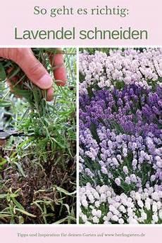 Lavendel Zierpflanzen Garten Lavendel Lavendel Und