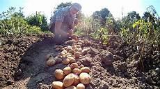 kartoffelanbau im garten kartoffeln grundnahrungsmitteln und meinem