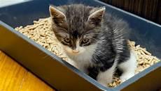 dopo quando si puã fare il test di perch 233 il gatto inizia a correre dopo aver fatto la cacca