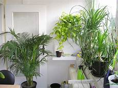 Pflanzen Für Dunkle Ecken In Der Wohnung - alte erinnerungen an meinen wintergarten 187 majas pflanzenblog