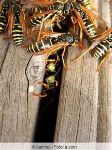 was machen wespen im winter wespennest unter dem dach dachboden wie entfernen