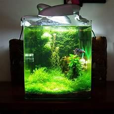 nano aquarium 30l nano 30l plant 233 page 6 aquascape ps