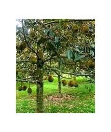 Anim Agro Technology Durian Sistem Pengairan 2