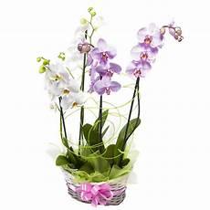 immagini fiori orchidee vendita e consegna fiori piante ed omaggi floreali