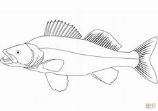 walleye coloring page free printable coloring pages