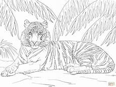 sumatran tiger laying coloring page free printable