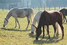 welches futter braucht mein pferd im herbst winter