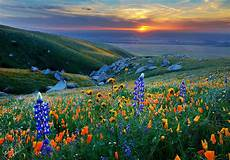 Flower Valley Wallpaper by Sunset Central Valley Sunset In The Of The