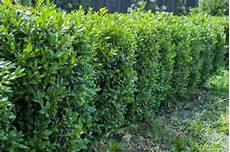 Büsche Pflanzen Sichtschutz - sichtschutz f 252 r den kleingarten 187 sch 246 ne ideen zum nachahmen