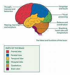 Brain Cancer Diagram by 57 Best Images About Cancer Information On