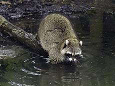 wildlife topics rivers alliance of ct wildlife priority topic
