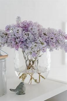 flieder in der vase oder 6 tipps f 252 r eine l 228 ngere